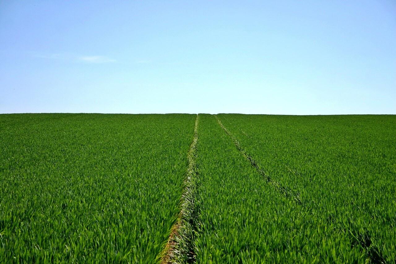 campos agricolas planos
