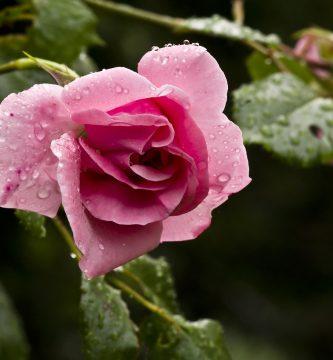 como instalar un sistema de riego por goteo en el jardin