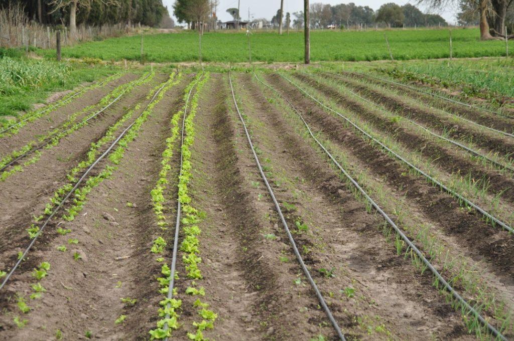 sistema de riego por goteo agricola